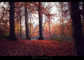 Like in your autumn dreams. by Bunnis