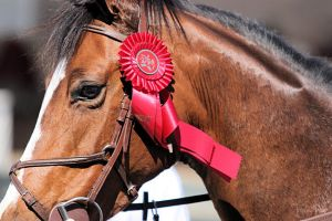 reserve champion by triple-bar