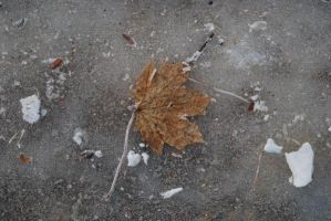 Leaf in Ice by stampingqueen