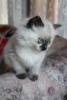Lilly the Kitten by icantthinkofaname-09