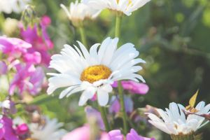Little daisy by FlorDiM