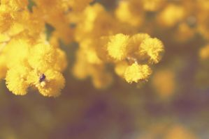 Wattle by apparate