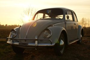 sunset beetle2 by fontah2