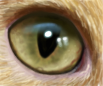 drawplz - an eye by Trutze
