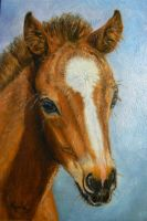 Cute Foal  oil painting by KerryOriginals