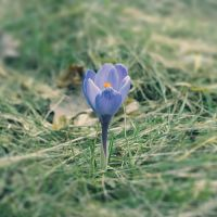 spring is coming by wojtar