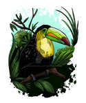 Toucan by Adamzworld