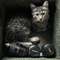 Canon Cat by MaraDamian