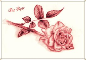 The Rose by Ana-starsia