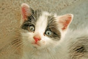 Baby Cat by Claire991