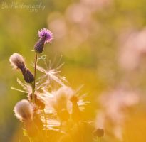 A World not my Own by PhotographsByBri