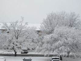 white trees, Columbus, Ohio, America by unlockedthoughts