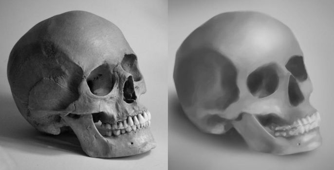 Skull Study by 2Dnoodles92