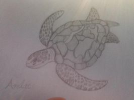 Andre the Turtle by OtakuFish95