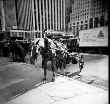 nyc holga 3 by malomorgen