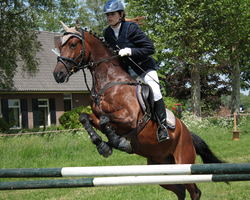 Pony competitions stock 6 by Bundy-Stock
