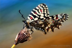 Butterfly by GJ-Vernon