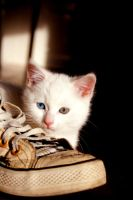 Hiding Loulou by eline-w