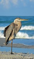 Sanibel Sentinel by TerribleTer