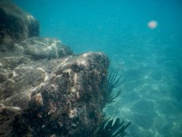 Bermuda 051  Underwater Stocks by FairieGoodMother
