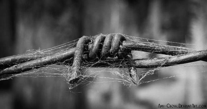 Spider's barbed wire by Amy-Crow