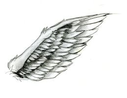 Wing by tobilou