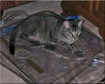Library Cat Contest 3 by WDWParksGal-Stock