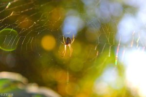 A Spiders World. by ZEUS1001