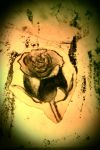charcoal rose by kimsmiley97