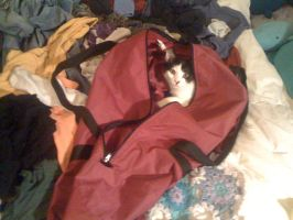 laundry cat by lovechairmanmeow