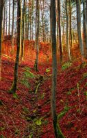A forest, ablaze. by Aenea-Jones
