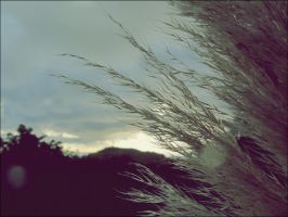 windy days by Fluessiges-Feuer