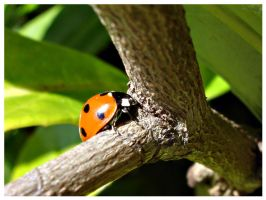 Ladybird by Refract