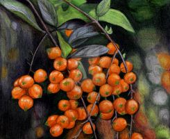 Orange coloured fruit by Erika-Farkas