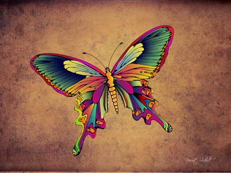 butterfly by bd670816