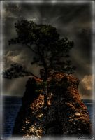 Scary Tree HDR by TonistL