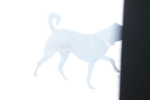 Teleporting Dog by Zbychowiec