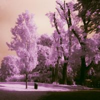 Infrared Park 2 by Argolith