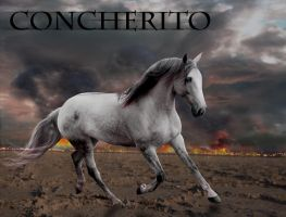Concherito Charrie Manip by snowybell14