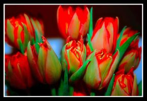 Tulips v2 by simoner