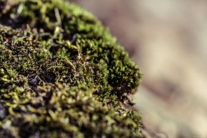 More Moss by WickedOwl514