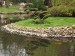 The tree and the gold fish in Japanese garden by Adagem