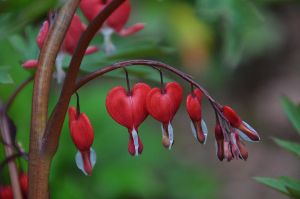 My Bleeding Heart by Mararda