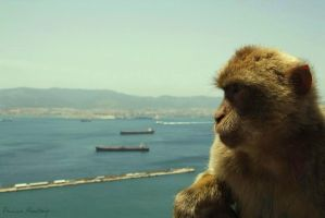 Welcome to Gibraltar by Paolajn