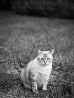 Documentary of Cat by Queen-Kitty