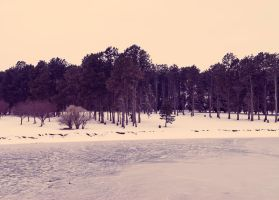 Winter in the Park by turtlephotography