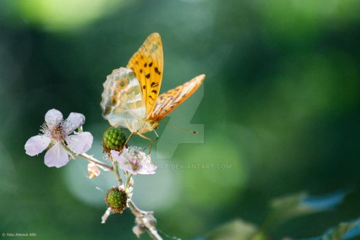 Butterfly by JohnMcT