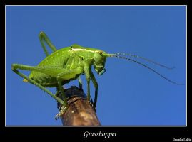 Grasshopper by JasenkaLuksa