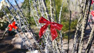Happy Holidays from Arizona by wildc5rd