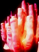 Pink Coral by Masheli